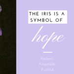 Are You Like an Iris? There's Hope